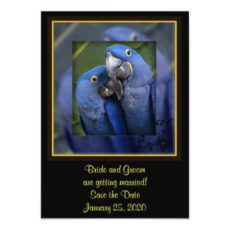 Boda azul del loro invitación 12,7 x 17,8 cm