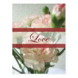 Boda casi blanco del amor de los claveles 6 postal