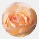 Boda color de rosa Sunlit Etiquetas Redondas