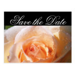 Boda color de rosa Sunlit Tarjetas Postales