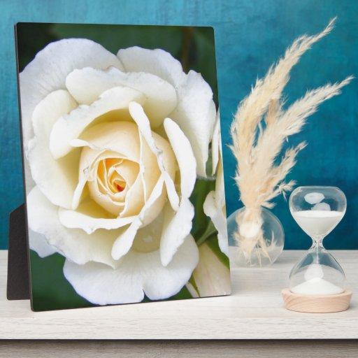 Boda floral color de rosa romántico placas