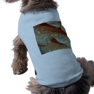 Boda subió camisetas de perrito