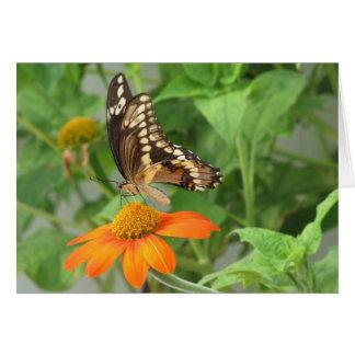 Boda - tan hermosa como la mariposa (a) tarjeta de felicitación
