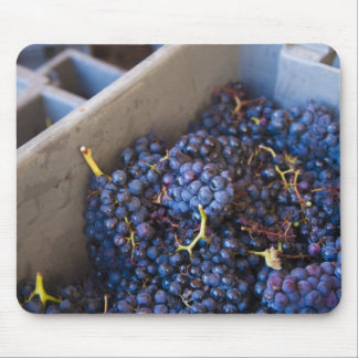 Bodega Marques de Riscal winery, grapes Mouse Pad