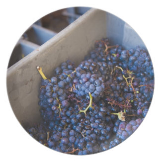 Bodega Marques de Riscal winery, grapes Dinner Plates