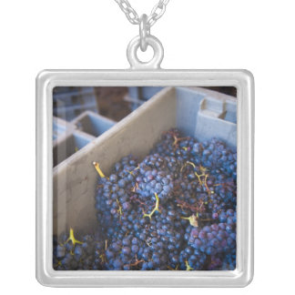 Bodega Marques de Riscal winery, grapes Silver Plated Necklace