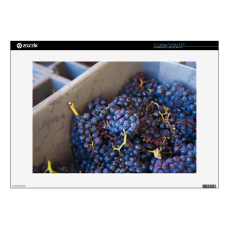 Bodega Marques de Riscal winery, grapes Decal For Laptop