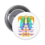 body_abdomina_color pins