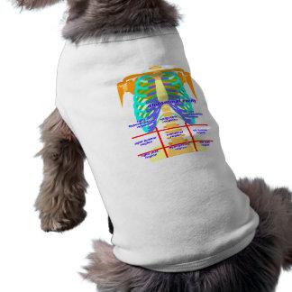 body_abdomina_color shirt