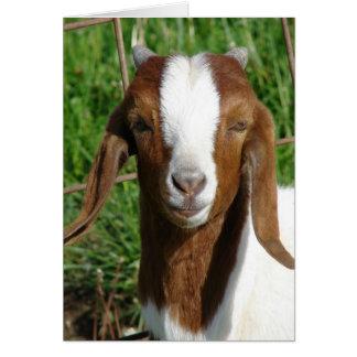 Boer Billy Goat Kid Card