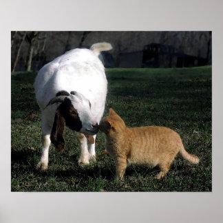 Boer Goat And Cat Portrait Poster Print