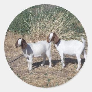 Boer Goat Kids Classic Round Sticker