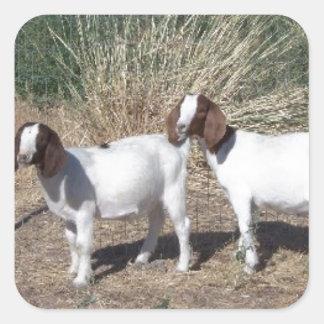 Boer Goat Kids Square Sticker
