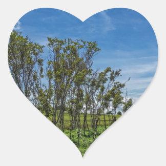 Bog Forest at Big Meadows Heart Sticker