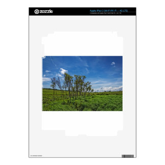 Bog Forest at Big Meadows iPad 3 Decal