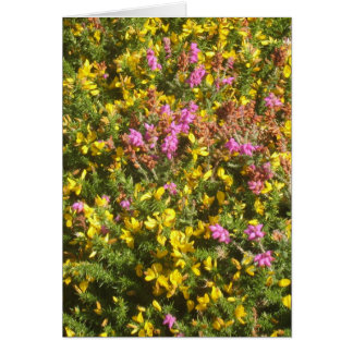 Bog Heather and Petty Whin Greeting Card