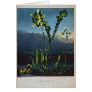 Bog Plants Greeting Card