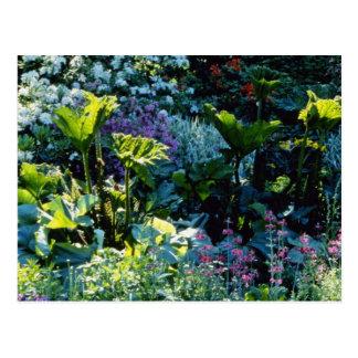 Bog Plants flowers Post Cards