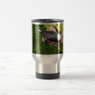 Bog turtle affixed with radio transmitter coffee mugs