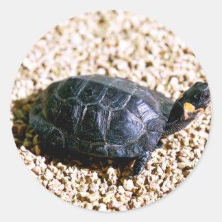 Bog turtle classic round sticker