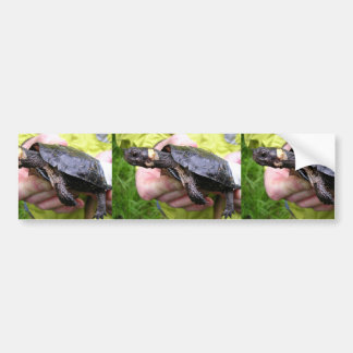 Bog turtle with affixed radio transmitter bumper sticker