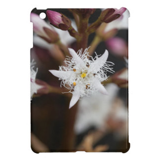 Bogbean (Menyanthes trifoliata) Cover For The iPad Mini