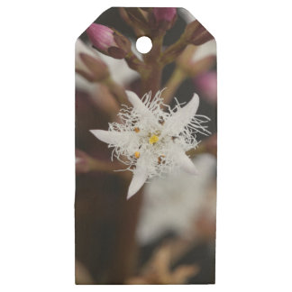 Bogbean (Menyanthes trifoliata) Wooden Gift Tags