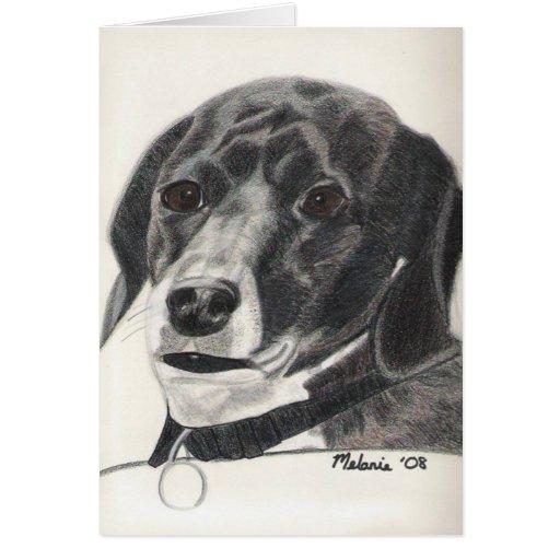 Boglen Terrier -  Bruno Greeting Cards