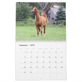 BOGO Colts 2 year old photos Calendar