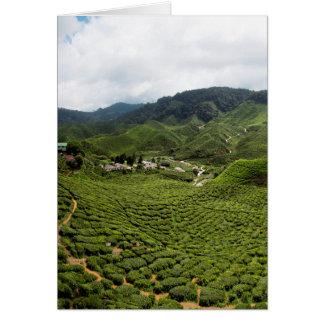 Boh Tea Plantation Card