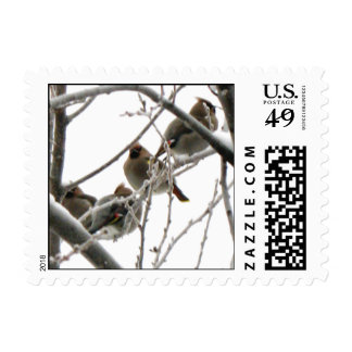 Bohemian Wax Wings Postage Stamps