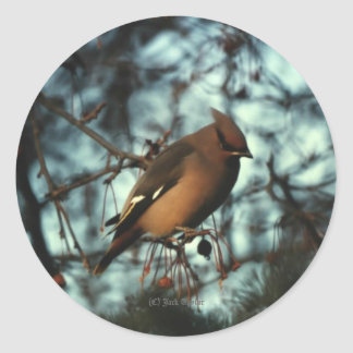 Bohemian Waxwing #01 Classic Round Sticker
