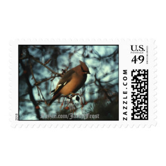 Bohemian Waxwing #01, Zazzle.com/Jack9Frost Stamp