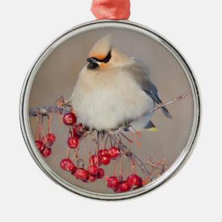 Bohemian waxwing in winter, Canada Metal Ornament