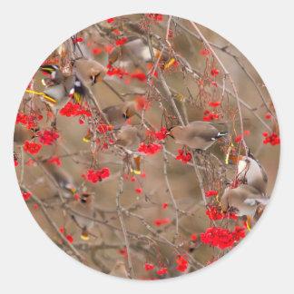 Bohemian Waxwings Feeding On Mountain Ash Classic Round Sticker