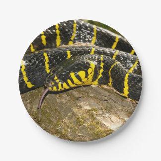 Boiga dendrophila or mangrove snake paper plate