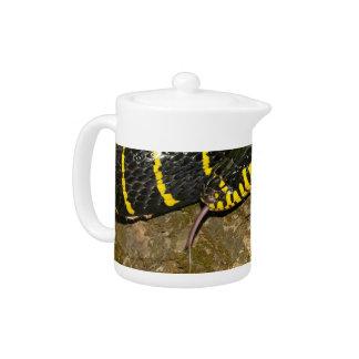 Boiga dendrophila or mangrove snake teapot