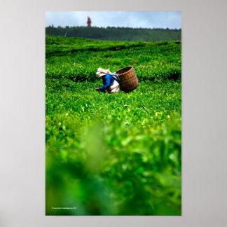 Bois Chéri Tea Picker Poster