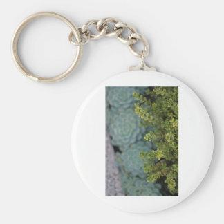 Boj y Succulents - fotografía de la bella arte Llavero Personalizado