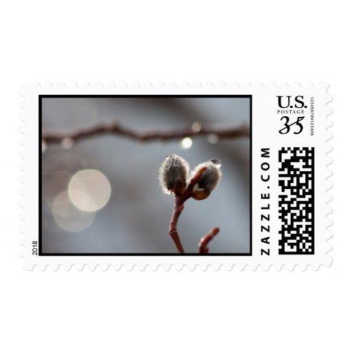 Bokeh Beautiful Stamps