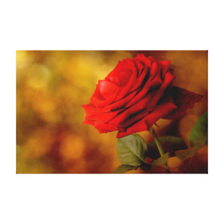 Bokeh Red Rose Canvas