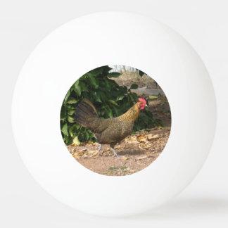 Bola de ping-pong del gallo pelota de ping pong
