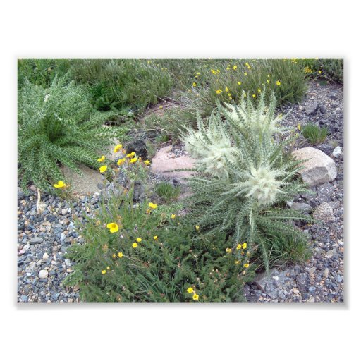 Bola escarchada: Wildflowers alpinos Fotografías
