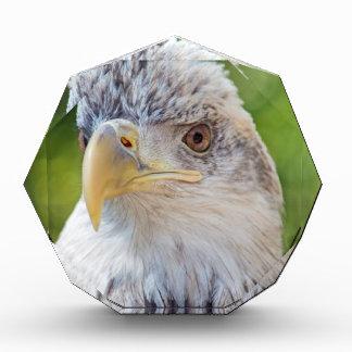 Bola joven Eagle