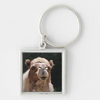 Bold Camel Key Chain