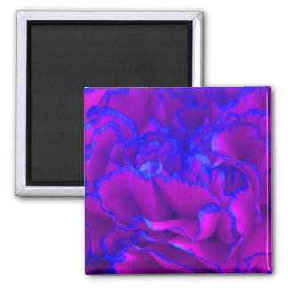 Bold Fuschia Pink and Blue Carnation Flower 2 Inch Square Magnet