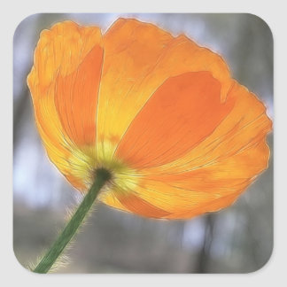 Bold Orange Iceland Poppy Square Sticker