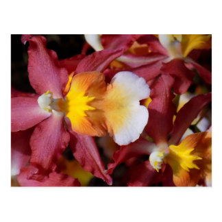 Bold Orchids Postcard