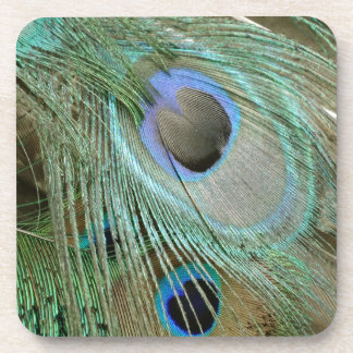bold peacock eye feathers beverage coasters