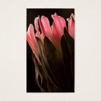Bold Pink Tropical Protea Flower Business Card